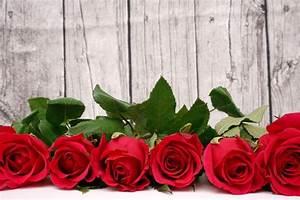 1 Rote Rose Bedeutung : valentinstag rote rosen vor holzwand 1 lizenzfreie fotos bilder kostenlos herunterladen ~ Whattoseeinmadrid.com Haus und Dekorationen