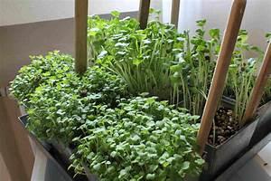 Avocado Pflanze Richtig Schneiden : kirschlorbeer selber ziehen kirschlorbeer stecklinge ~ Lizthompson.info Haus und Dekorationen