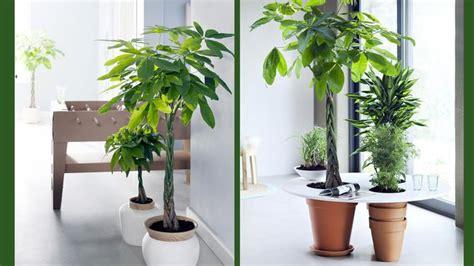 grande plante appartement euroseconde