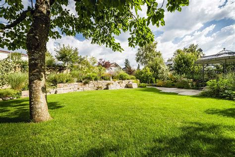 Bäume, Pflanzen, Baumpflege Und Garten  Grimm Für Garten