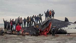 A successful whale hunt in northern Canada revives an ...