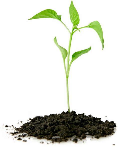 planter un arbre en pot arbre laval plantation d arbre 224 laval planter un arbre arboplus