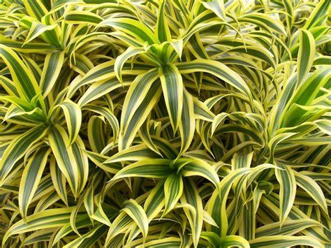 le pour plante interieur les plantes qui purifient votre int 233 rieur permaculture