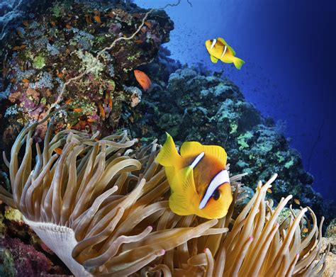 Great Barrier Reef: sign now to help stop its destruction