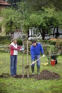 Mini Obstbäume Für Den Garten : apfelsorten die besten f r den garten mein sch ner garten ~ Heinz-duthel.com Haus und Dekorationen