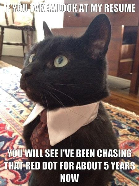 Talking Cat Meme - top 99 ideas about cat vs the red dot on pinterest cats funny cat memes and dots