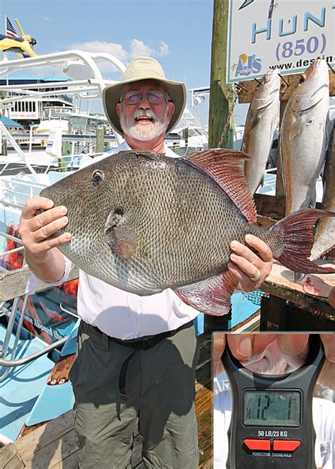 2019 Gray Triggerfish Season Huntress Charter Fishing
