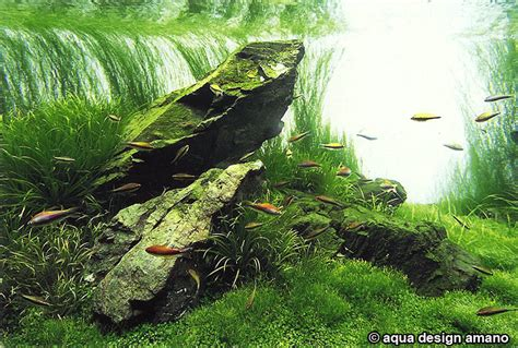Aquascape Ada - ada planted aquascape aquaticquotient photo gallery