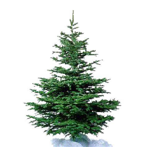 kerstboom zelf impregneren rh brandbeveiliging