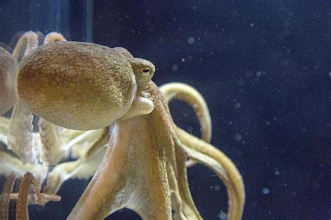 mollusk facts habitat behavior diet