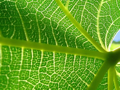 Pflanze Große Grüne Blätter die 69 besten gr 252 ne hintergrundbilder