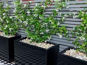 Plantes Grimpantes Pot Pour Terrasse : fabriquer un brise vue pour une terrasse ~ Premium-room.com Idées de Décoration