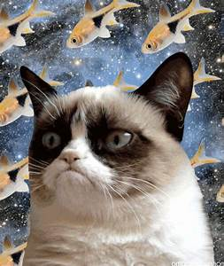186 best images about Cats in space!!!! on Pinterest ...