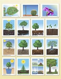 Impressionistic Charts Botany