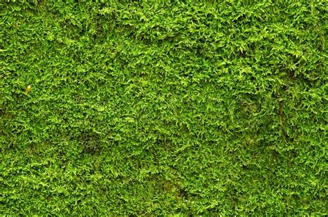 Images Of Moss A Background Of Green Moss Stock Photo Colourbox