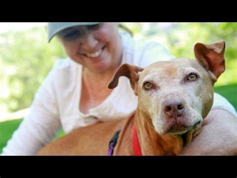 victim  dog fighting  adopted stubbydog