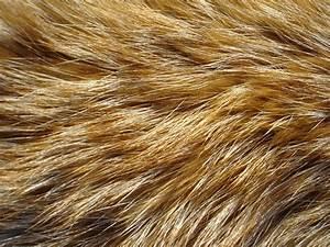 Fur Texture 6 by Fox-N-Wolf on DeviantArt
