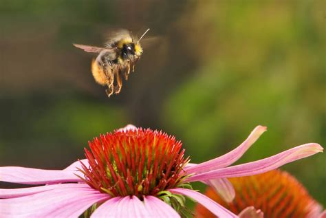 Plant A Bee Garden -the Honeybee Conservancy