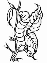 Coloring Pages Insect Insects Primarygames Bug Science Color2 Cartoon sketch template