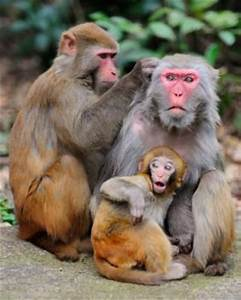 'Engine of consciousness' found in macaques Th?id=OIP
