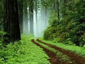 imagenes ( Bosques Tropicales ) - Taringa!