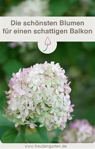 Blumen Für Schattigen Balkon : 41 besten balkon und terrassen ideen bilder auf pinterest balkon terassen ideen und terrassen ~ Orissabook.com Haus und Dekorationen