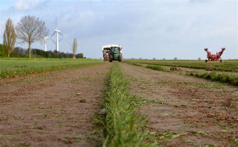 Wie Wird Rollrasen Verlegt by Wie Verlegt Rollrasen Rasen Anlegen Anleitung Zum