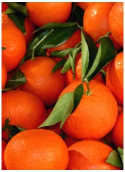 Orange Clementines Aesthetic Items Liza Collect Orangensaft