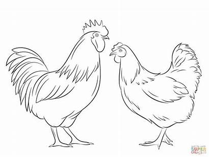 Rooster Chicken Hen Coloring Chickens Pages Super