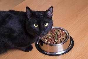 Cats La : cat not eating 8 things to try when your cat won t eat catster ~ Orissabook.com Haus und Dekorationen