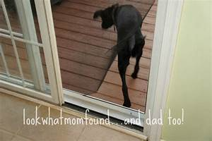 How to make your own doggy door for Build your own dog door