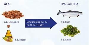 Omega 3 Fettsäuren Lebensmittel : omega 3 fetts uren herkunft vitalit t aus dem meer omega life ~ Frokenaadalensverden.com Haus und Dekorationen