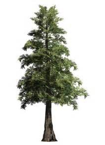 big tree supply