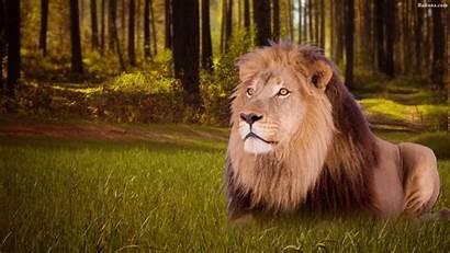 Lion Wallpapers Baltana