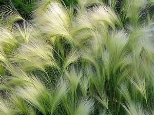 Bambus Zurückschneiden Frühjahr : gr ser grasarten ~ Whattoseeinmadrid.com Haus und Dekorationen