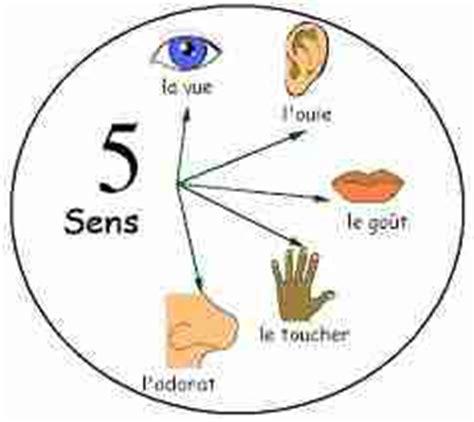 cuisine des cinq sens cinq sens les