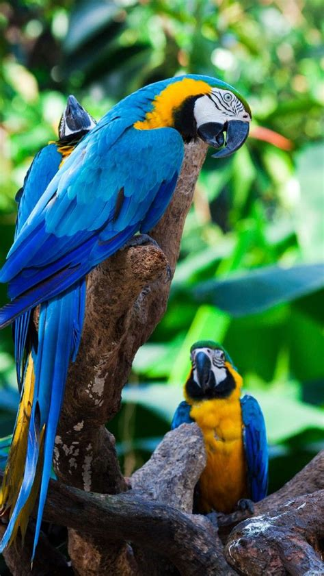 scarlet macaw amazon rainforest pinterest pet birds