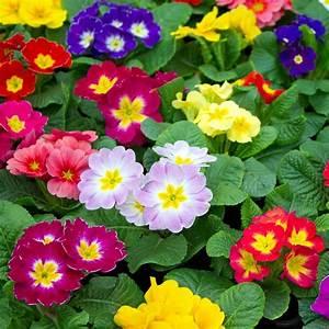 Plantes Et Jardin : primev re des jardins plantes et jardins ~ Melissatoandfro.com Idées de Décoration