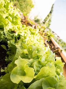 Salat Selber Anbauen : von junggem se hochbeeten nacktschnecken gem se selber anbauen mit kindern more is now ~ Markanthonyermac.com Haus und Dekorationen