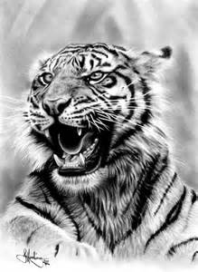 Realistic Tiger Drawings