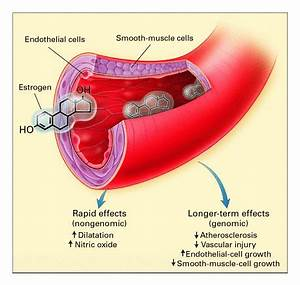 The Protective Effects of Estrogen on the Cardiovascular ...