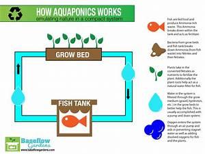 Learn To Aquaponic  Small Aquaponics System Diagram