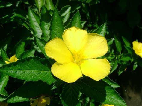 ดอกไม้ไทย: ดอกไม้ไทย