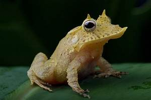 Frogs Endangered So Take A Look At Them Now