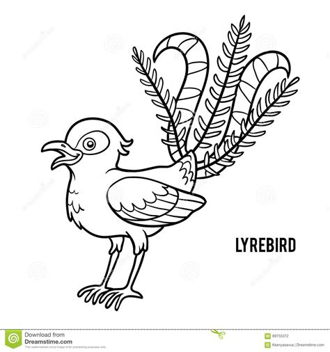 lyrebird cartoons illustrations vector stock images