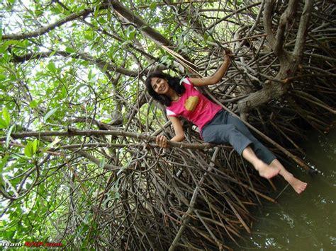 forest pichavaram pondicherry trip sep bhp team regards