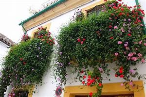Discover  U0026quot Los Patios De Cordoba U0026quot  Festival Of Flowers 2019