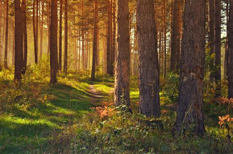 September Images September In The Forest Free Stock Photo Domain