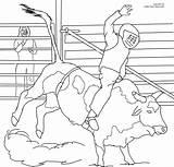 Bull Coloring Riding Pages Bucking Printable Cowboy Pbr Ferdinand Drawing Sheets Miniature Print Bulls Bar Pdf Coloringhome Again Looking Case sketch template