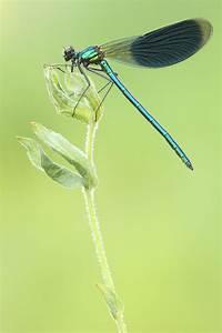 Grün Und Blau : gr n und blau forum f r naturfotografen ~ Markanthonyermac.com Haus und Dekorationen